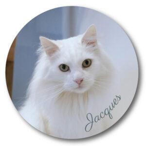Jacques Coaster