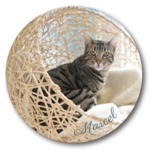 Marcel Coaster